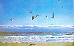 Seagulls and Surf Ocean Scene Postcard