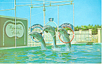 Click here to enlarge image and see more about item n1144: Porpoises Marineland Florida Postcard