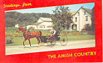 Amish Boy in Horse and Buggy, PA  Postcard