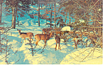 Deer on the Alert Postcard