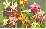 Nine Examples of Orchids Hawaii Postcard n1220