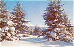 Morrisville PA Winter Wonderland Postcard