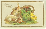 Easter Postcard Bunnies and Chick