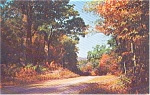 Click here to enlarge image and see more about item p1032: Lovely Autumn Road Scene Postcard p1032