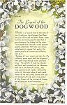 Click here to enlarge image and see more about item p10498: Legend Of The Dogwood Postcard 1967