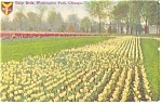 Chicago IL Washington Park Tulips Postcard p10500