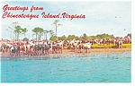 Chincoteague, Virginia Herd of Wild Ponies Postcard
