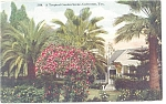 Click here to enlarge image and see more about item p10623: Galveston, TX, Tropical Garden Postcard 1913
