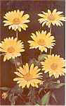 Click here to enlarge image and see more about item p1073: Yellow Daisy  Postcard