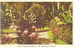 Click here to enlarge image and see more about item p10784: St Petersburg FL Sunken Gardens Postcard p10784 1964
