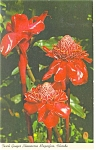 Torch Ginger Florida Postcard p10790 1966