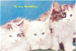 Click here to enlarge image and see more about item p1091: Three Cute Kittens Large Postcard p1091