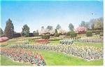 Hershey,PA, Rose Garden Tulips Postcard