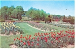 Hershey,PA, Rose Garden Beds of Tulips Postcard