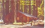 Richardson Grove State Park, Redwoods, CA Postcard 1959