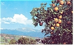 Click here to enlarge image and see more about item p10938: California Oranges Postcard p10938