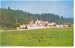 Carnation Milk Farms, Washington Postcard