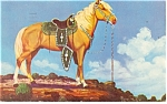 Click here to enlarge image and see more about item p10951: Palomino Stallion Postcard 1953