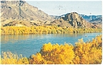 Click here to enlarge image and see more about item p10985: Colorado River Golden Tamarisk Postcard ca 1957