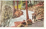 South Cheyenne Canon, CO, Rapids Postcard
