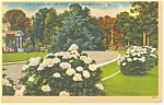 Click here to enlarge image and see more about item p11074: Rehoboth Beach  DE Silver Lake Drive Postcard p11074