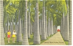 Florida Stately Royal Palms Linen Postcard p11151