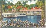 Silver Springs, FL,  Linen Postcard