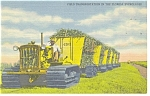 Field Transportation in Florida Everglades Postcard p11264