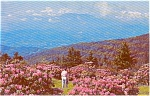 Click here to enlarge image and see more about item p1137: World's Largest Rhododenron Garden Postcard