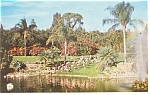 Click here to enlarge image and see more about item p11384: Parrot Jungle FL Florida Postcard p11384