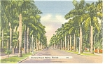 Stately Royal Palms Florida Postcard p11396