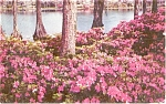 Greenfield Park Wilmington NC Postcard p1139