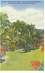 Click here to enlarge image and see more about item p11428: St Petersburg FL Flowers Sunken Gardens Postcard p11428