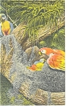 Click here to enlarge image and see more about item p11442: Parrot Jungle FL  Macaw Family Postcard p11442 1951