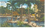 Clearwater  FL Kapok Tree Inn Indoor Garden Postcard p11546