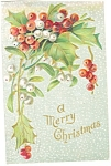 Christmas Postcard Holly and Berries 1908