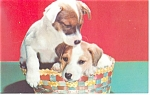 Click here to enlarge image and see more about item p11631: Fox Terrier Pups Postcard
