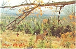 Deer Running in Autumn Woods Postcard 1976