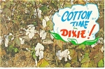 Cotton Time in Dixie Postcard