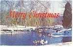 Winter Stream with Ducks Postcard