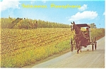 Amish Buggy near Intercourse, PA  Postcard