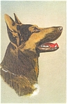 Click here to enlarge image and see more about item p11817: Alsatian Wolfhound Postcard