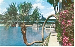 Lucky Palm,Silver Springs, FL Postcard 1958