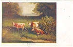 Click here to enlarge image and see more about item p11933: Cows in Pasture Postcard  1907