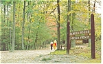 Cook Forest State Park,PA, Forest Trails Postcard