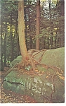 Cook Forest State Park,PA, Tree on Rock Postcard