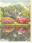 Click here to enlarge image and see more about item p12217: Charleston,SC,Magnolia Gardens Postcard 1942