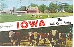 Click here to enlarge image and see more about item p12225: Iowa Farm and Cattle Scenes  Postcard 1978