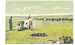 Click here to enlarge image and see more about item p12301: Branding Calves on Open Range Postcard 1906