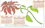 Poinsettia Postcard 1908
